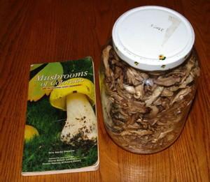 mushroomjar.jpg